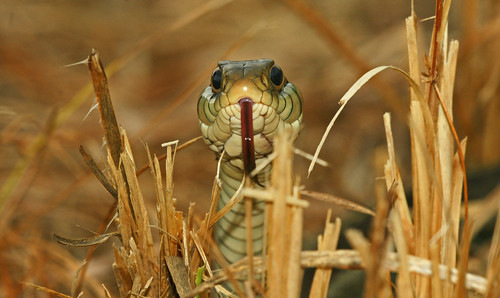 florida reptile snake preserve garder guana a700 70400g alphamegapixel alphamegapixelcom