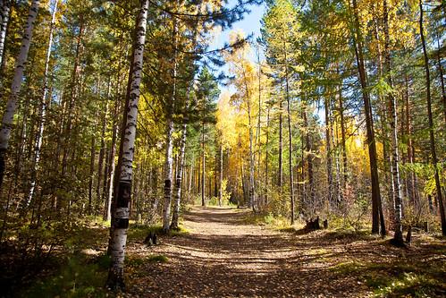 autumn sun russia siberia istilimsk