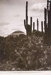 Teotihuacan Pyramid, by Hugo Brehme