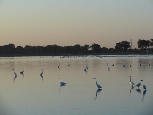 oklahoma sunrise swan ducks oklahomacity lakeoverholser