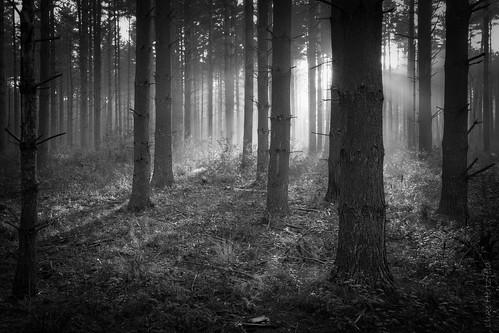 morning trees light blackandwhite bw mist nature monochrome fog forest sunrise landscape outdoors dawn rays oakopeningspreserve