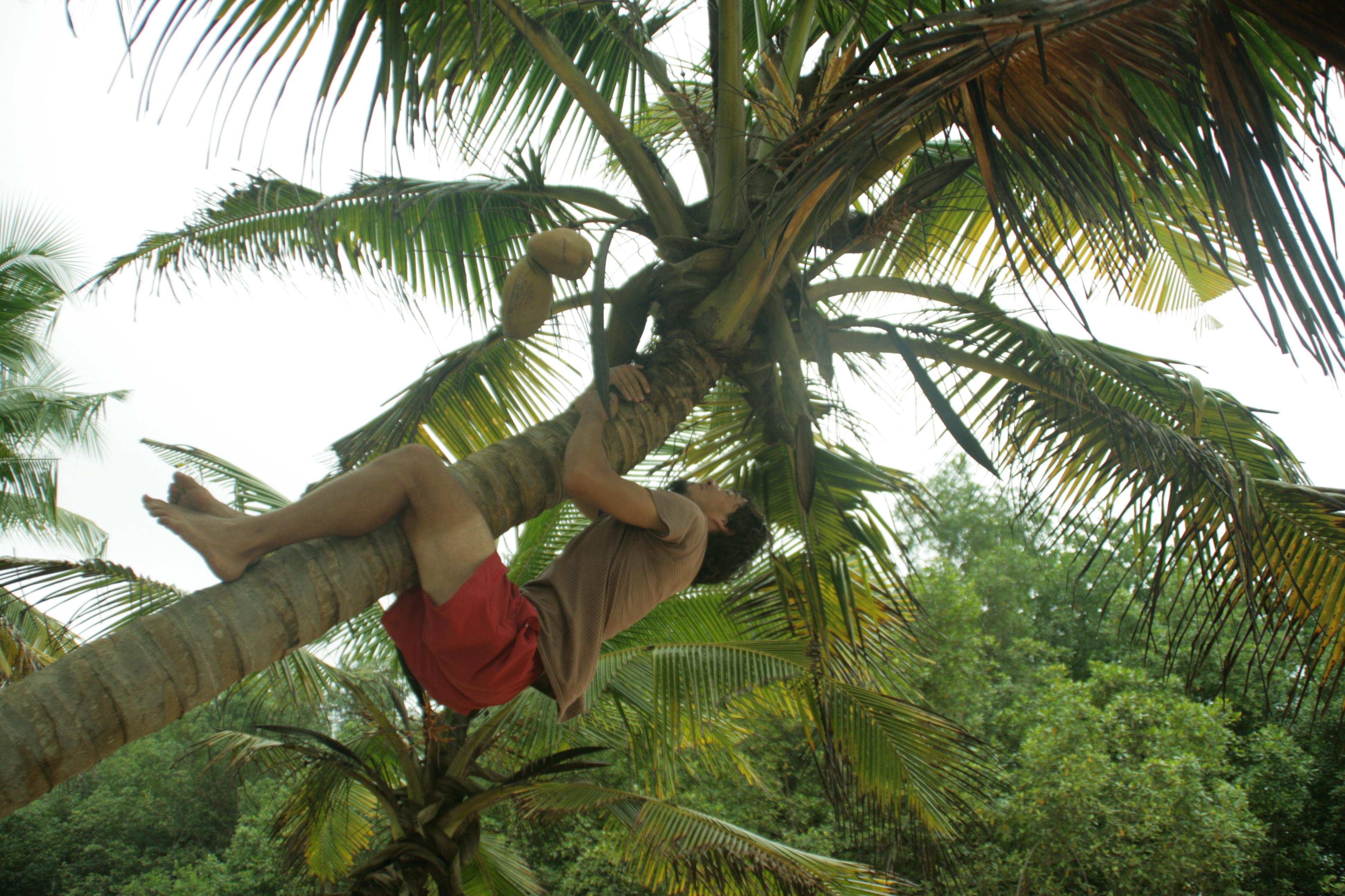 Com agafar un coco 3