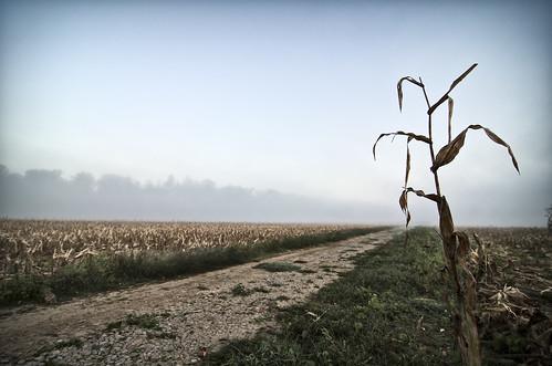 fog sunrise river cool corn cornfield farm tennessee uncool clarksville cumberlandriver cool2 cool5 cool3 cool4 uncool2 uncool8 uncool3 uncool4 uncool5 uncool6 uncool7 uncool9