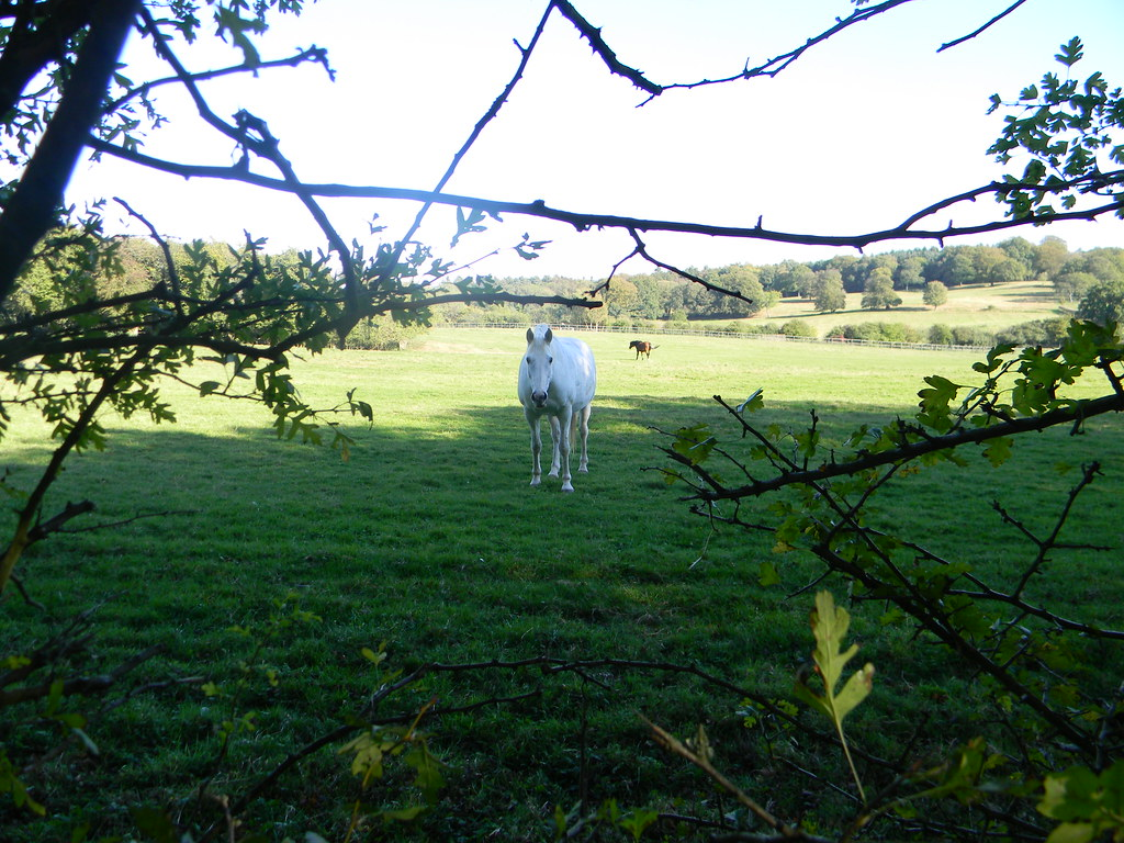 Horse Guildford to Horsley