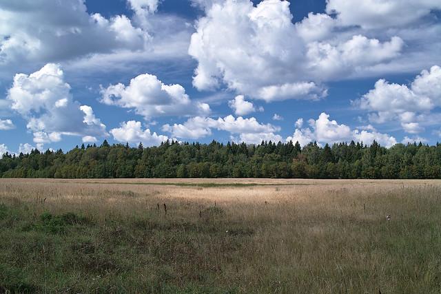 SDIM7766 Field Landscape 2 km south of Village Nikolskoe (никольское)