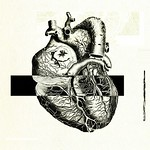 Heart anatomy 03