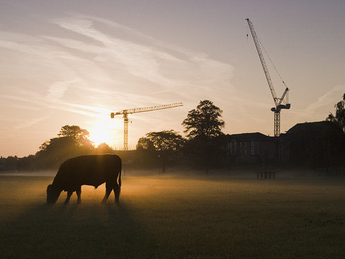 morning autumn cambridge sky mist misty sunrise geotagged cow cranes g2 backlit midsummercommon flickraward
