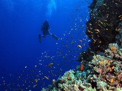 Ocean Tribe Scuba Diving
