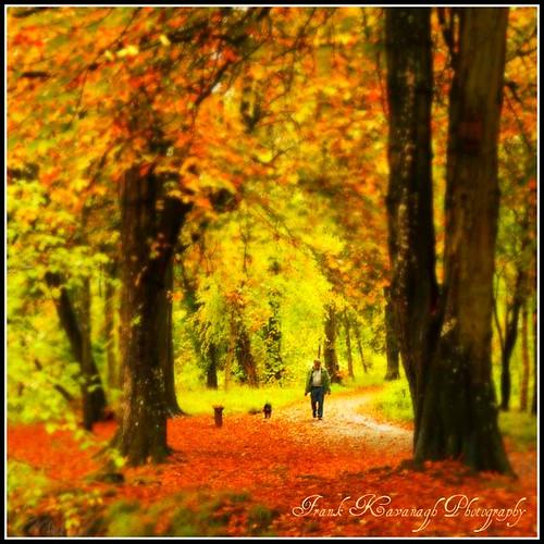 autumn trees kilkenny ireland colour fall dogs nature leaves landscape canal seasonal parks eire trail emeraldisle irlanda lanes colorphotoaward irishphotographers kilkennyphotographers kilkennyphotographicsociety frankkavanaghphotography