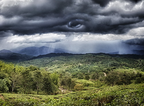 Storm over tea gardens Borneo