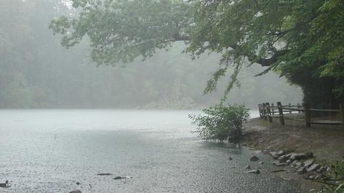 trees ohio storm rain pond path ducks bible christianity youngstown ecclesiastes millcreekpark thelilypond preterism preterist1951