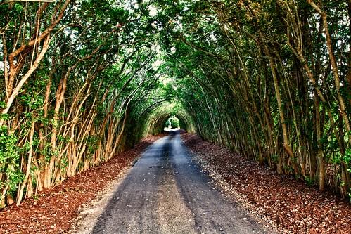 trees landscape outdoor tunnel nantucket