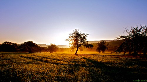 morning trees apple water fog sunrise wasser shadows nebel sommer wiese dew gras tau grassland sonne sonnenaufgang schatten baum apfel gruen ernte morgens metzingen badenwuerttemberg reutlingen obstwiese erntezeit