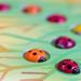 Ladybird by BarbaraCZ