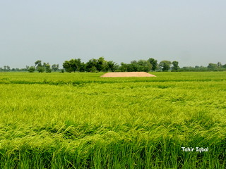 Great Punjab