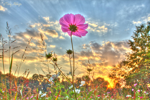 park sunset sky clouds terry poppy wildflower hdr wasena aldhizer
