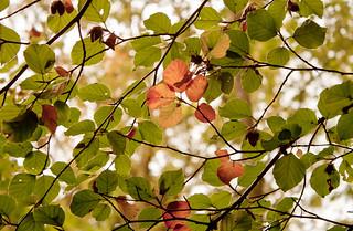 Autumn beauty...