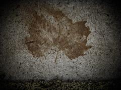 22/52 Leftover Leaf