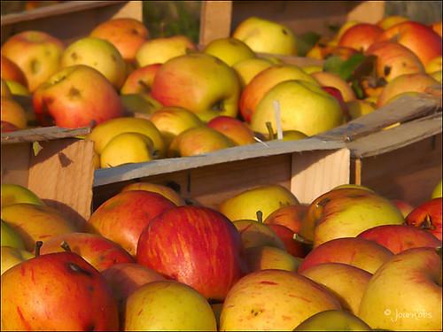 Pommes ...