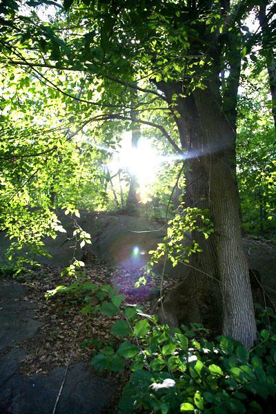 inwood hill park _beh-5