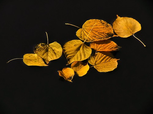 Floating Leaves...