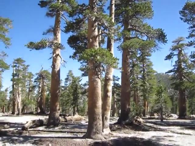 0760 Newton Drury to Marion Mountain - plateau video panorama