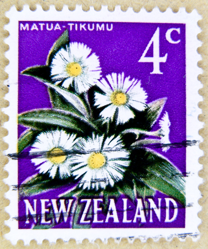 beautiful postage stamp New Zealand 4c (Matua Tikumu,Lederartige Celmisie,Celmisia coriacea) flowers 邮票 新西兰 selyo Niyusiland 切手 ニュージーランド perangko Selandia Baru francobolli Nuova Zelanda डाक टिकटों न्यूज़ीलैंड timbres-poste nouvelle-zélande почтовые маркa