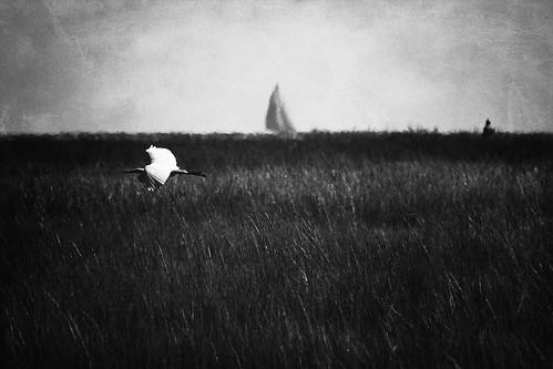park columbus heron sailboat person october ct madison marsh egrit hammonasset giantonio kgiantonio kengiantonio