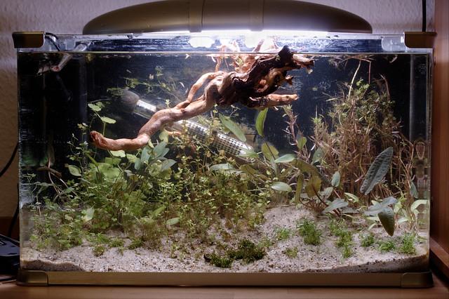Diatoms begone flickr photo sharing for Decoration aquarium 60 litres