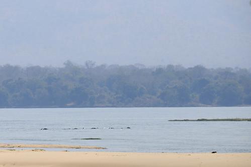 elephant swim nikon zimbabwe manapools d90 zambeziriver zwe nikond90 mashonalandwestprovince