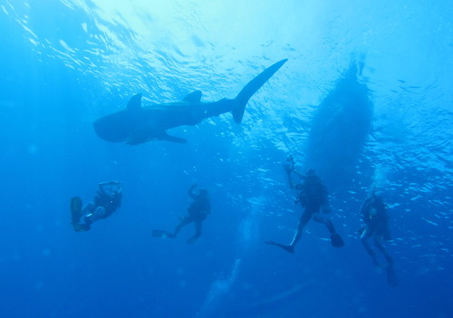Red Sea - 10 best places on Earth to swim with sharks