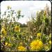 Hambrook Marsh Flowers by DoodleHop