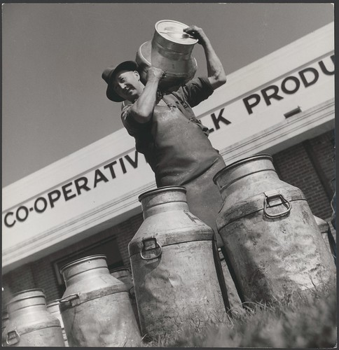 Milk carrier Frederick (Fred) Jones delivers full milk cans at Drouin's co-operative milk factory, Drouin, Victoria