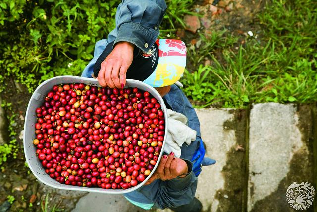 Granos de café Chinchina-Caldas