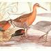 Birds of America v.1.
