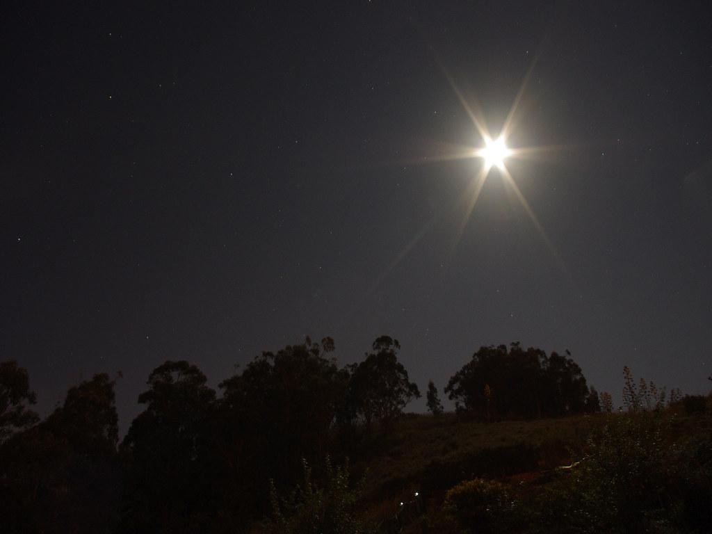 Árboles, estrellas y La Luna