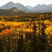 Denali Autumn
