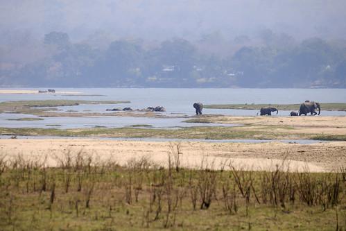 elephant nikon zimbabwe manapools d90 zambeziriver zwe nikond90 mashonalandwestprovince