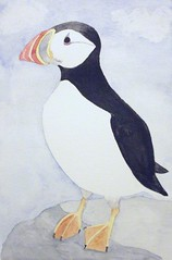 animal, puffin, charadriiformes, sketch, flightless bird, drawing, illustration, beak, bird, seabird,