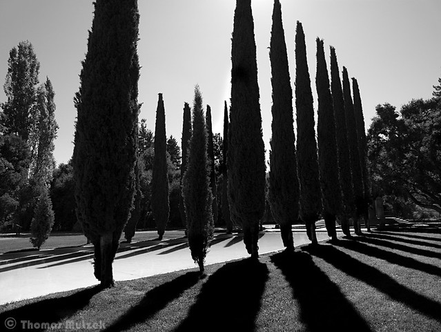 Trees and Pool at Las Pulgas Water Temple, Redwood City, California