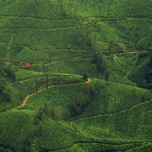 india kerala hills aps countryroad munnar windingroad teagardens idukki concordians aphotoshooter