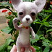 needle felted chihuahua 15