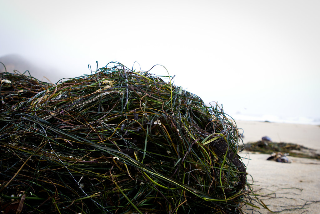 A tangle of seaweed