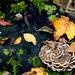 Autumn by appareil