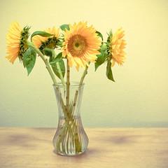 flower arranging, sunflower, cut flowers, flower, yellow, floral design, plant, gerbera, vase, flower bouquet, floristry, still life photography, still life,