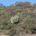 Cerro con cacti; cerca de Mariscala de Júarez, Oaxaca, Mexico por Lon&Queta