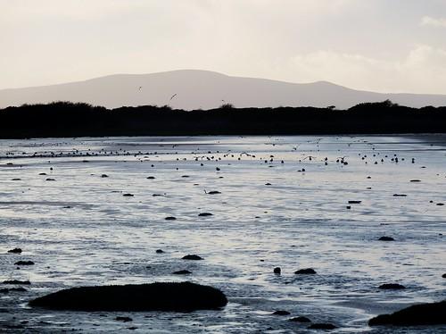 Evening Waterscape, Solway Firth