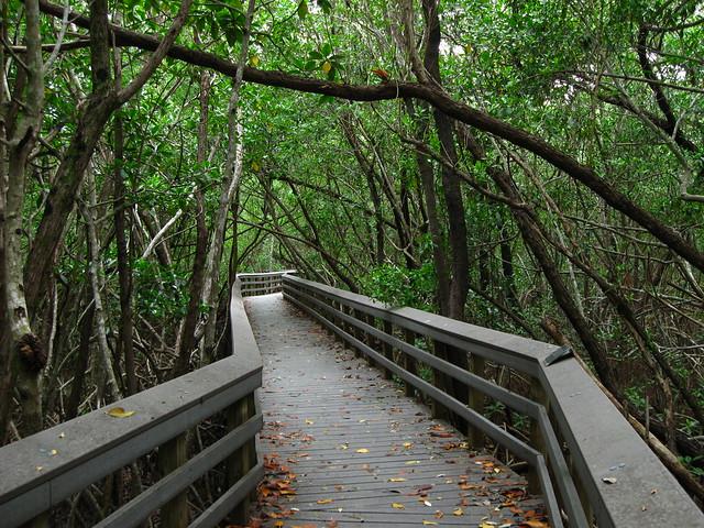 Parque Nacional de los Everglades, Florida, Estados Unidos