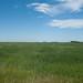 Ellsberry, North Dakota