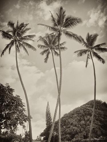 travel vacation tree vintage hawaii nikon coconut maui palm hana monochrom d7000
